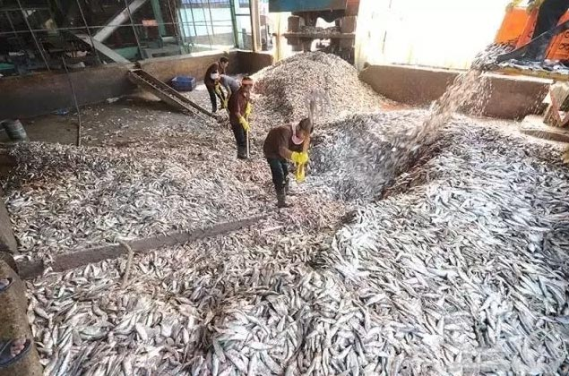 customer's fish meal processing plant